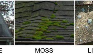 Algae moss lichens